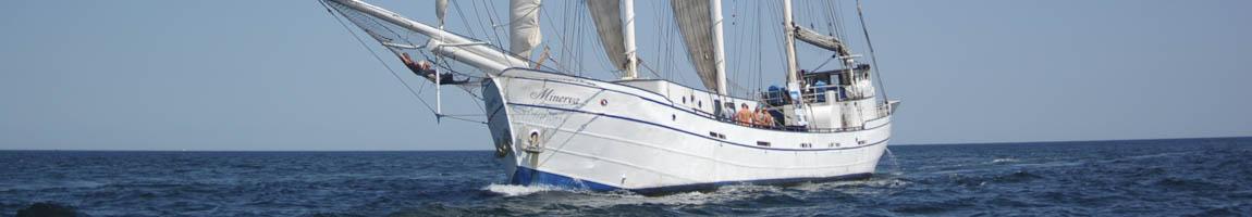 Segelrevier Ärmelkanal Bild zeigt Traditionsschiff Minerva