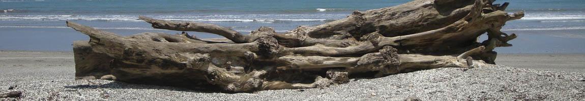 Segeltörn Costa Rica Bild zeigt Treibholz am Strand