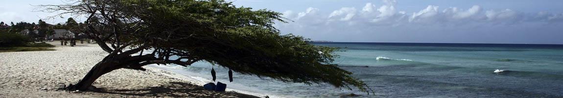 Segeltörn Kleine Antillen Bild zeigt einen Baum am Strand