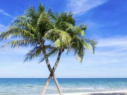 Yachtreise Karibik zeigt gekreuzte Palmen auf einer Sandbank
