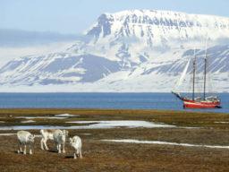 Arktischer Herbst zeigt das Traditionsschiff Noorderlicht