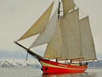 Segelreisen Walsafari zeigt die Noorderlicht
