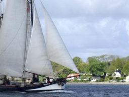 Hanse Sail Bild zeigt die PEGASUS