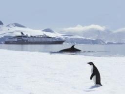 Ponant Antarktis Kreuzfahrten zeigt Megayacht im Eis