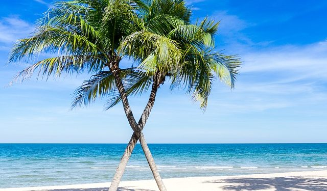 Segelreisen Dominikanische Republik zeigt Palmen am Strand
