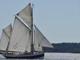 Hanse Sail auf der Belle Amie zeigt den Logger unter Segeln